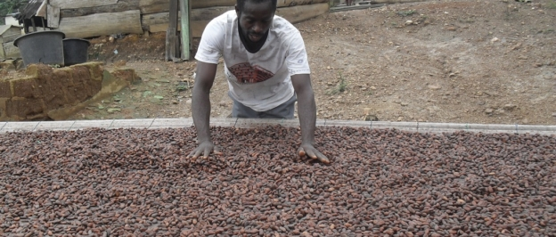 How Cocoa Is Produced In Ghana